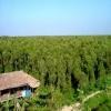 U Minh Ha cajuput forest