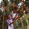 Lai Thieu Orchard and Cau Ngang tourist destination