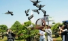 Releasing pigeons (Tha chim)