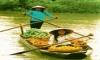 The role of women in Vietnam