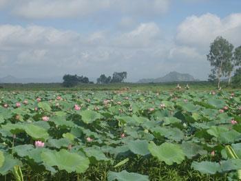 Hồ Dục Thuý (ảnh Xuân Toán)