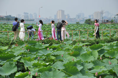 The beauty of lotus at West Lake